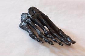 人体模型-脚骨